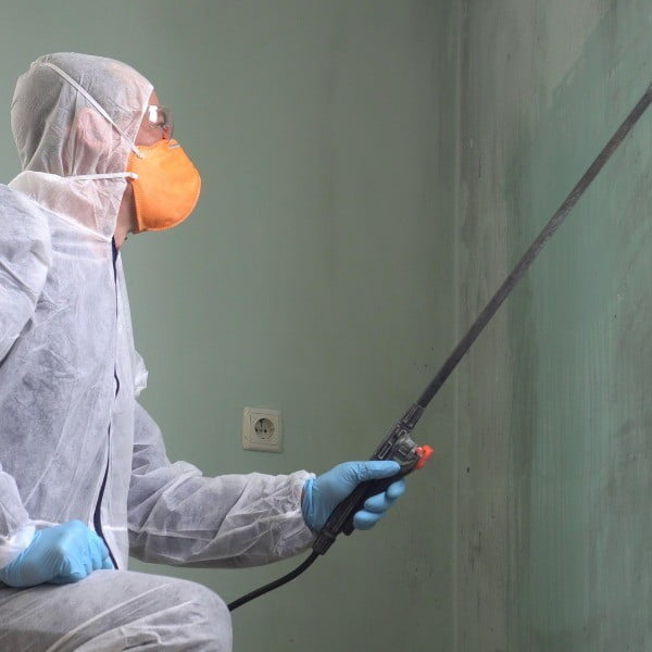 Mold Remediation Services in Massachusetts and Rhode Island - Banner Environmental Services